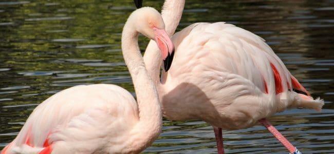 flamingi w zoo w gdańsku oliwie